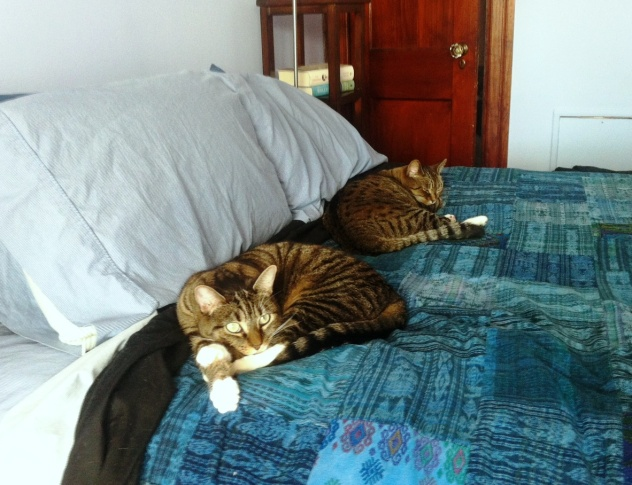 Cats are already bored with the proceedings